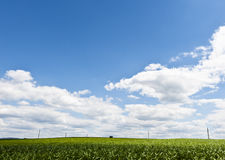 Power Line on a Field Stock Images