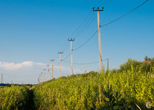 Power line in the field Stock Photography
