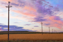 Power line in a field at sunset Stock Photography