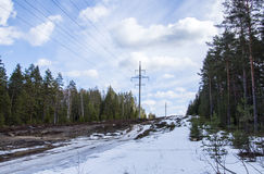 Power line. In the pine forest Royalty Free Stock Image