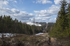 Power line. In the pine forest Stock Image
