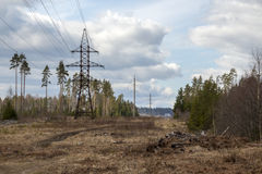 Power line. In the pine forest Royalty Free Stock Photo