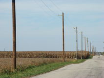 Power line poles in a row Royalty Free Stock Image