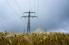 Power line. On wheat field Stock Images