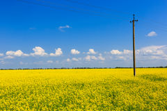 Power line on rape field Stock Images