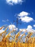 Power line and rice field  11 Stock Photos