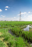 Power line. And rice field Stock Photography