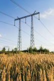Power line tower in field of rye at sunset Stock Photo