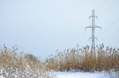 The power line tower is located in a marshy area, covered with snow. Large field of yellow bulrushes.  stock photography