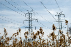 Power Line Towers and Bulrush Stock Photography
