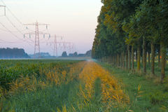 Power line in a yellow sky at sunrise Stock Photography