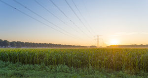 Power line in a yellow sky at sunrise Stock Images