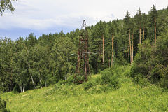 Power lines in the Altai Mountains. Royalty Free Stock Photography