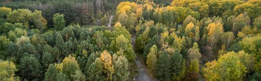 Power lines in the Chernobyl exclusion zone. Pass through the bright autumn forest royalty free stock photography