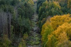 Power lines in the Chernobyl exclusion zone. Pass through the bright autumn forest stock image