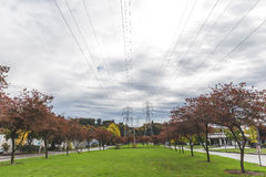 Power lines in colorful park in Seattle Stock Photography