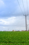 Power lines on a field Royalty Free Stock Photos