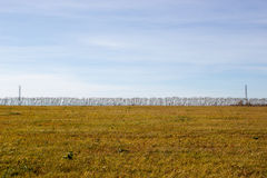 Power lines in field. Stock Image
