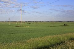 Power lines on green field with seedlings of Stock Photo