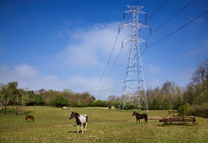 Power Lines And Horses Stock Photos