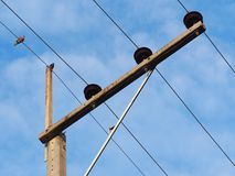 Power lines. One birds perch on power lines stock photo