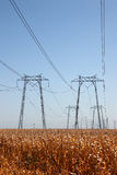 Power Lines over Corn Field Stock Image