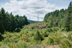 Power lines through a pine forest Royalty Free Stock Photo