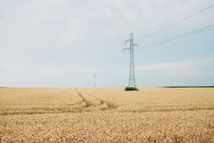 Power lines and poles on the field. Landscape Photo of Power lines and poles on the field stock photos