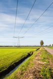Power lines and pylons in a rural landscape Stock Images