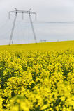 Power lines in rapeseed field Stock Image