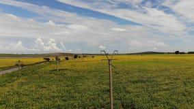 Power lines in sunflower field. Crane like shoot stock video footage