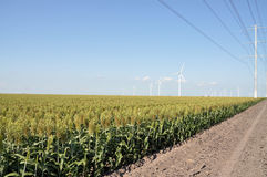 Power lines and wind turbines. In a field of sorghum.  Taken in South Texas Royalty Free Stock Photo