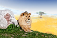 Power of lion king Royalty Free Stock Image