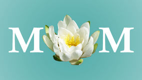 Power of Moms Flower royalty free stock photos