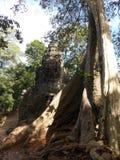 Power of Nature, Angkor Wat royalty free stock image