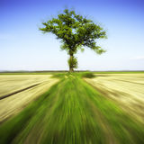 Power of the Nature. Color image Stock Photos