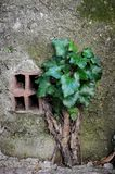 The power of nature. A plant that beat concrete. royalty free stock photography