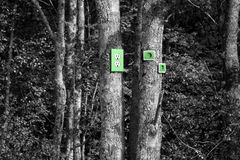 Power outlets on trees Stock Photo