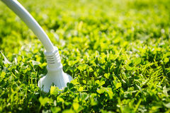 Power plug. Green energy concept Royalty Free Stock Images