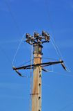 Power pole with external electric separator on top Royalty Free Stock Photo