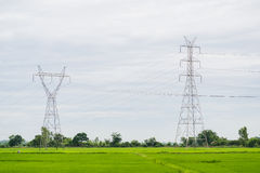 Power pole in a field of green. Royalty Free Stock Images