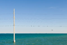 Power pole and lines in sea Royalty Free Stock Photo