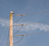 Power Pole Royalty Free Stock Photo