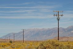 Power poles in the blooming desert Stock Photos