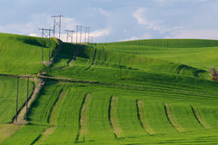 Power Poles and Wheat Stock Photo