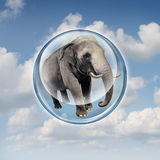 Power Of Possibilities. Concept with a realistic elephant lifted in the air in a bubble sphere as a business symbol of achievement and elevation in abilities to Royalty Free Stock Photos