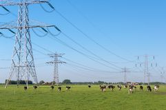 Power pylons and cows Royalty Free Stock Photo