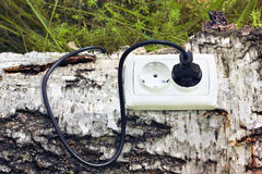 Power receptacle and switchplug on a tree Royalty Free Stock Images