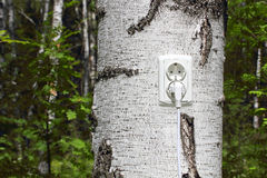 Power receptacle and switchplug on a tree Stock Photos