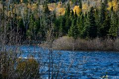 The power of river between the mountains. The river runs nourishing the vegetation of coniferous somewhere in Ontario province in Canada during the autumn while Royalty Free Stock Photo